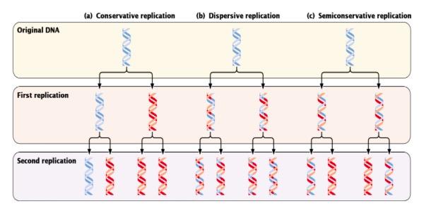 Figura G1 - Mecanismos propostos por Watson e Crick relativamente à replicação do DNA. Fonte: Pierce BA. Genetics: A Conceptual Approach. W. H. Freeman; 2013.