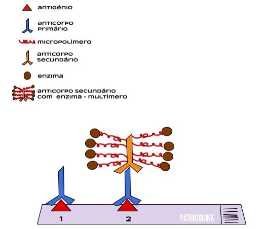 Figura I16 - Método micropolímero